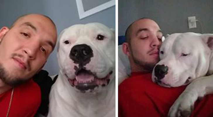 His dog needs surgery, so the owner puts his car up for sale