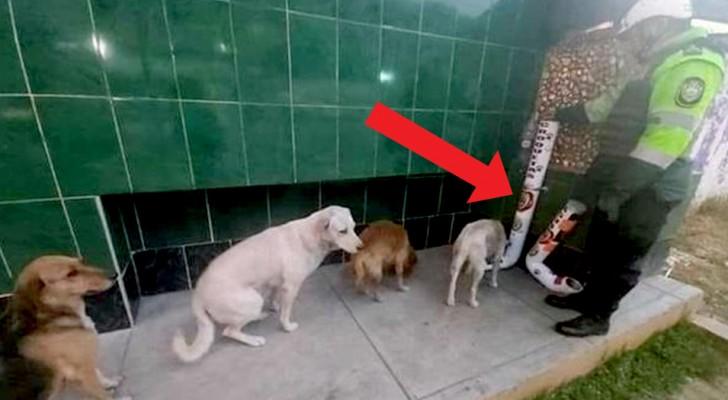 En polisstation i Peru har installerat två behållare med mat på gatan för herrelösa hundar