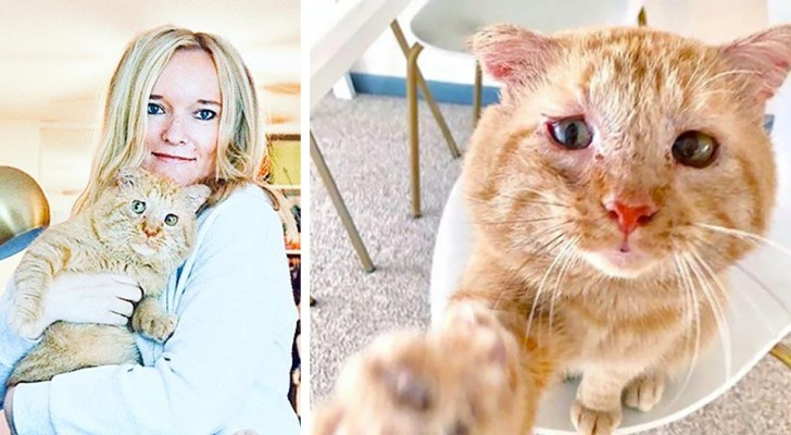 Mesmo com a proibição do dono da casa, esta mulher conseguiu adotar um gatinho que foi salvo da rua