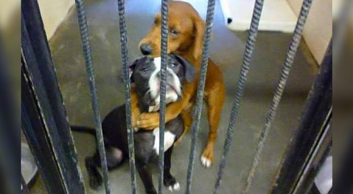 Diese 2 kleinen Hunde umarmen sich verzweifelt: Das Foto bewegt einen Mann, der sie adoptiert