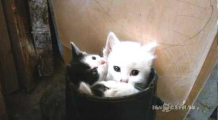 Gibt es etwas süßeres als drei kleine Kätzchen in einem Stiefel?