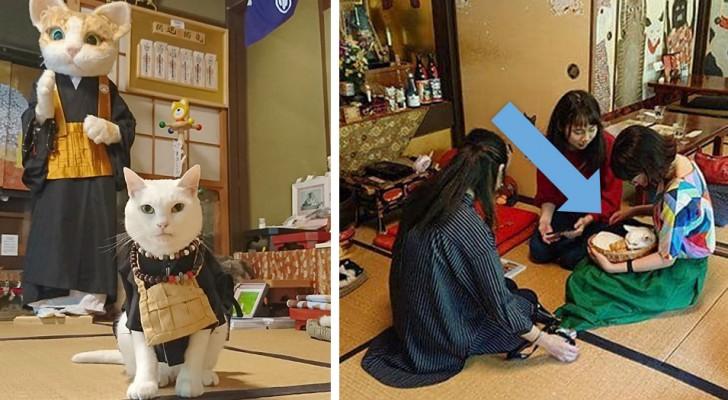 In diesem japanischen Tempel werden die Besucher von einem Katzen-Mönche empfangen, zusammen mit seinen Assistenten