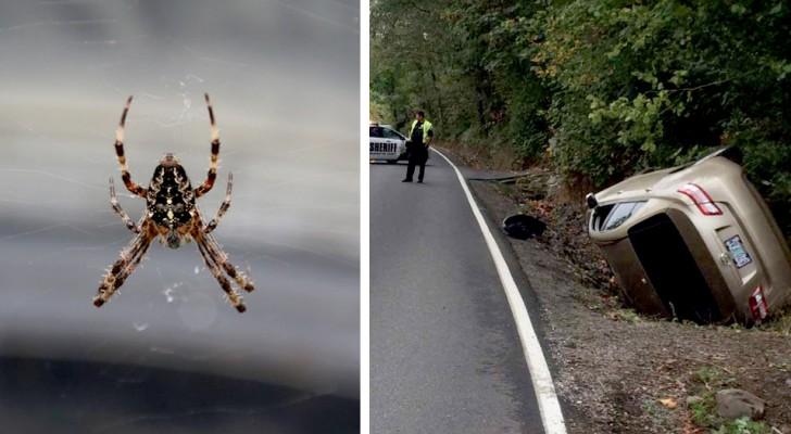 Observa una araña sobre el asiento del automóvil y sale fuera del camino: la conductora aracnofobica sale ilesa