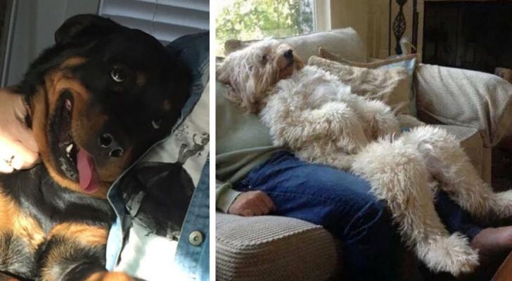 Questi 17 scatti fotografici mostrano come i nostri cani sappiano sempre tirarci su di morale