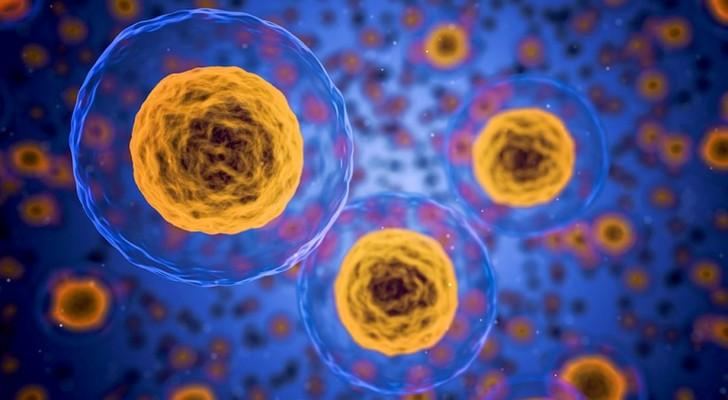 En cas de stress, les cellules masculines tendent à se suicider, les cellules féminines survivent : une étude le confirme
