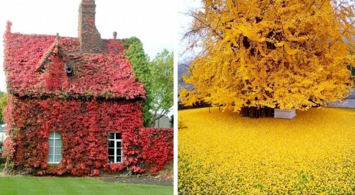 Een kleurenpalet is de hoofdrolspeler in deze fotogalerij die de magie van de herfst viert
