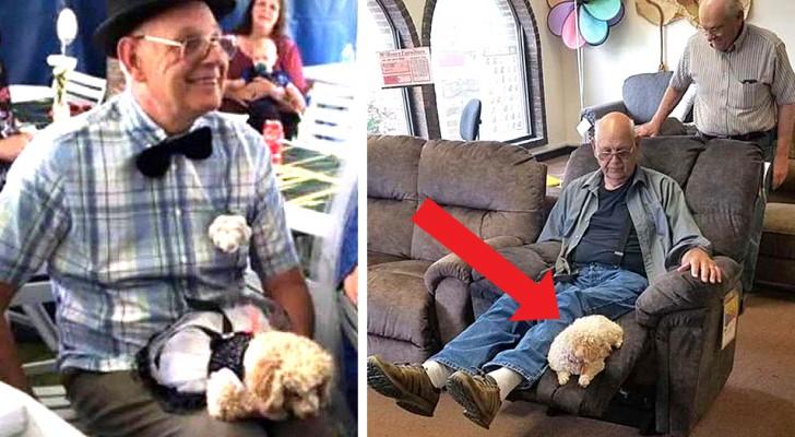 Questo adorabile nonno ha portato il suo cagnolino a fare shopping per scegliere insieme una nuova poltrona