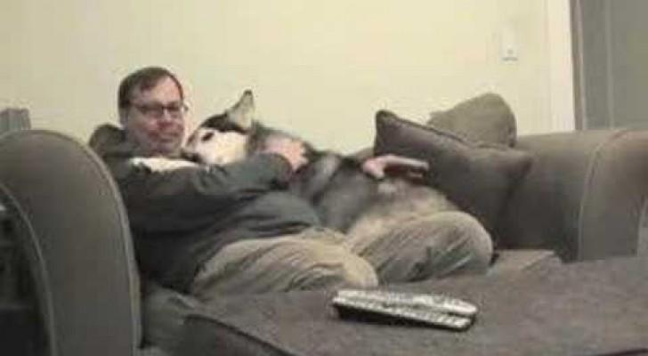 Dit is de manier waarop deze hond zijn baasje elke dag verwelkomt als hij terugkeert van zijn werk