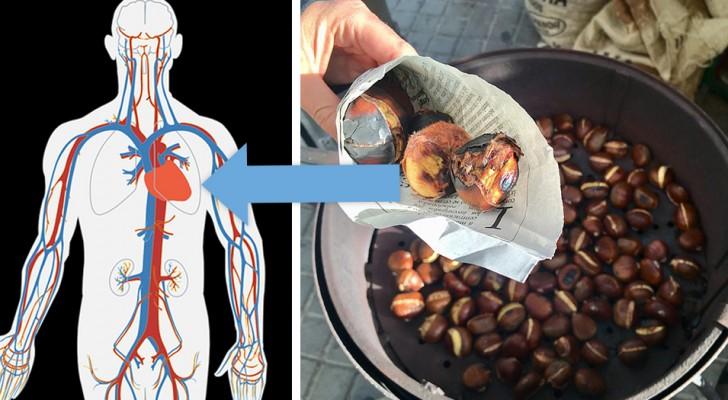 Die Kastanie, die Herbstfrucht ist reich an Vitaminen und Mineralien, die für die Gesundheit unseres Körpers unerlässlich sind