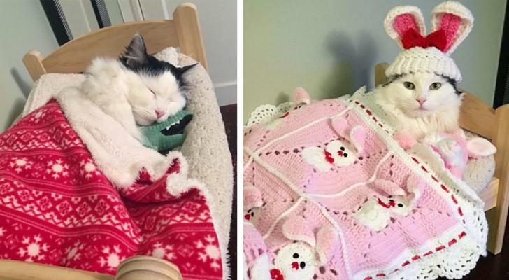 Ihr ehemaliger Besitzer hat sie misshandelt: Heute schläft dieses Kätzchen glücklich in ihrem Körbchen und hat sogar ihre Stofftiere