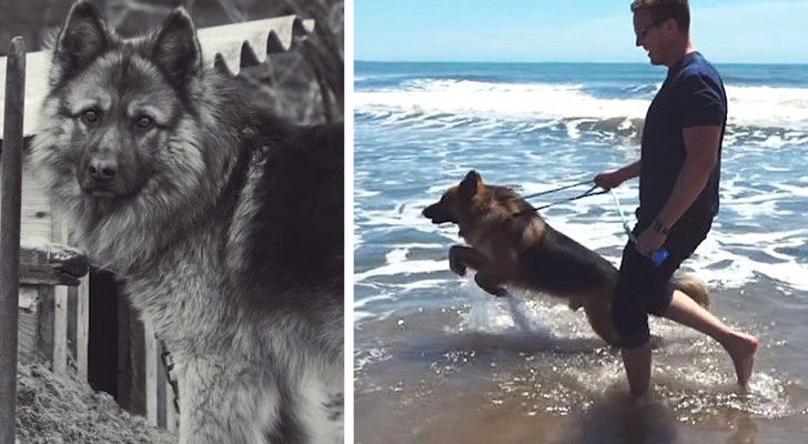 After 5 years in captivity, this dog sees the sea for the first time and cannot hold back its joy