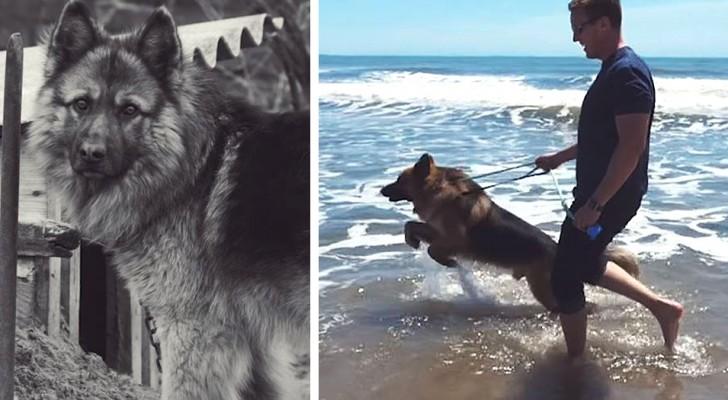 Nach 5 Jahren Gefängnis sieht dieser Hund zum ersten Mal das Meer und hält die Freude nicht zurück