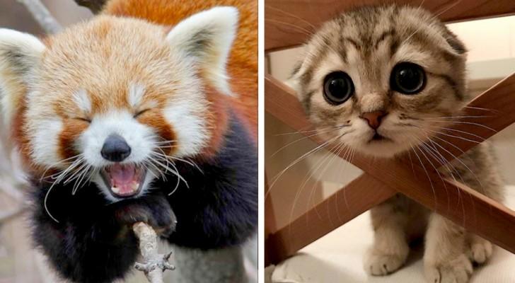 16 fotos de animais de companhia cheios de simpatia e doçura
