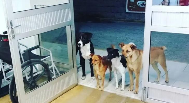 Ein Obdachloser wird ins Krankenhaus eingeliefert und seine 4 kleinen Hunde warten geduldig auf ihn an der Schwelle zum Krankenhaus