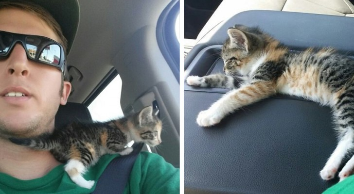En lastbilschaufför räddar en katt från gatan, men sedan vill han inte väcka den efter det att den somnat på sätet
