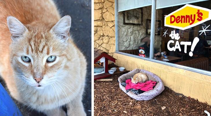 Después de haber sido abandonado, este gatito ha sido adoptado por un restaurante y por sus clientes