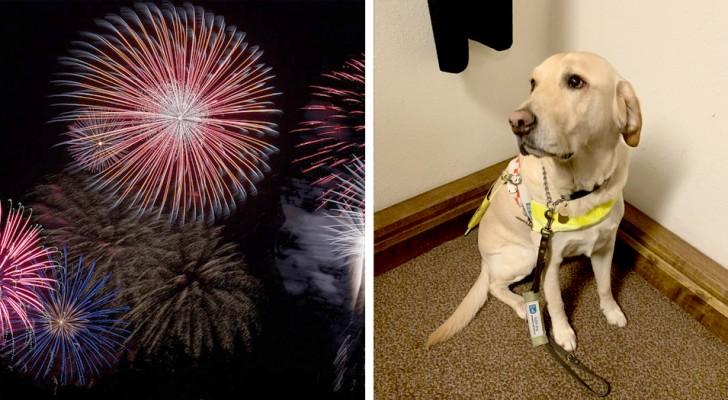 Aus Angst vor einem Feuerwerk hat ein Blindenhund sein blindes Frauchen verlassen