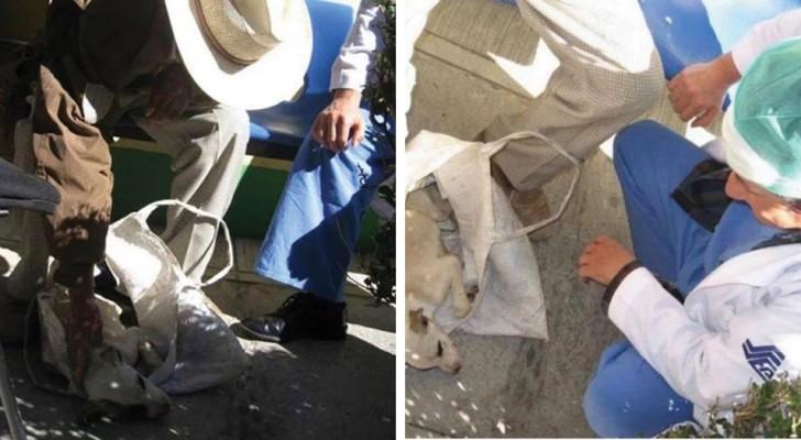 Um idoso leva o seu cachorro doente para um hospital para humanos: os médicos comovidos decidem ajudá-lo