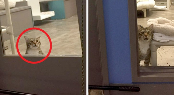 This cat was put in solitary confinement because it always managed to escape and also take other cats along with him