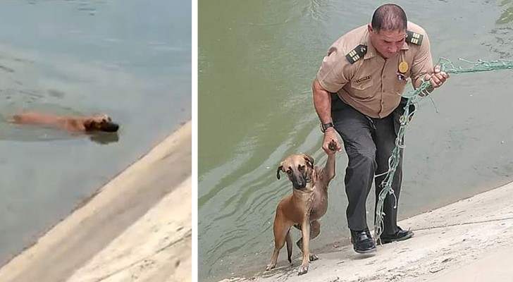 Este policial salvou um cachorro de rua que não conseguia sair fora de um canal