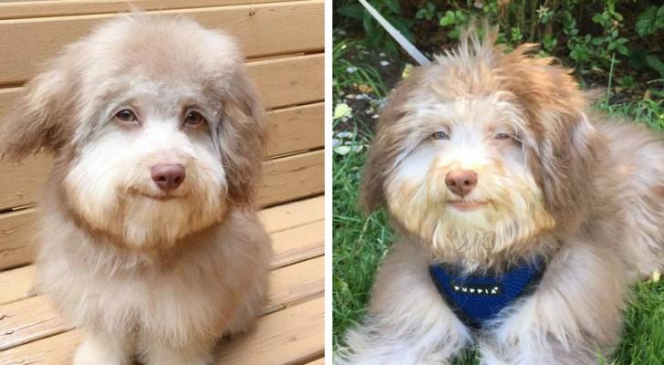 O cachorro com rosto humano: o seu olhar é tão intenso que parece uma pessoa
