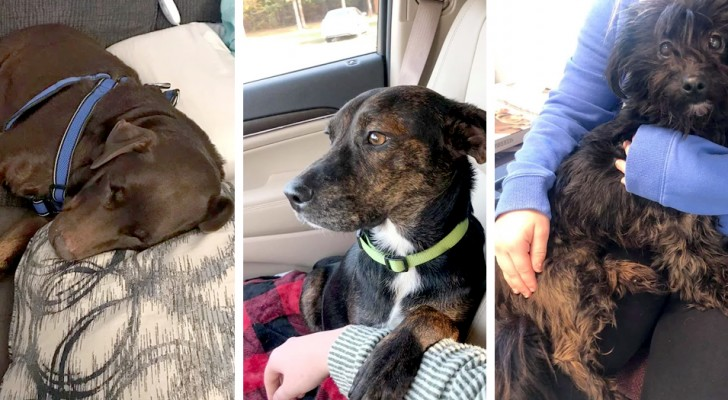 Había ido al refugio para adoptar un perro: al final ha salido de allí llevándose tres