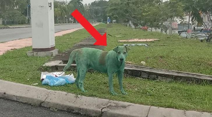 Dieser Hund wurde von Fremden grün angemalt und jetzt riskiert er sein Leben