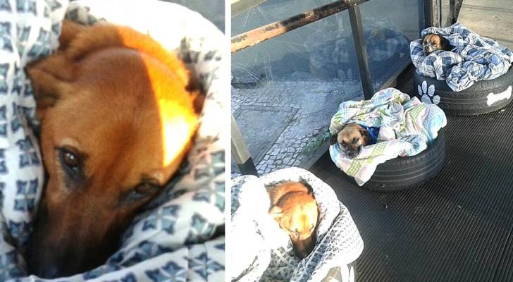 Os funcionários desta estação de ônibus oferecem abrigo para os cães de rua com cobertas e pneus