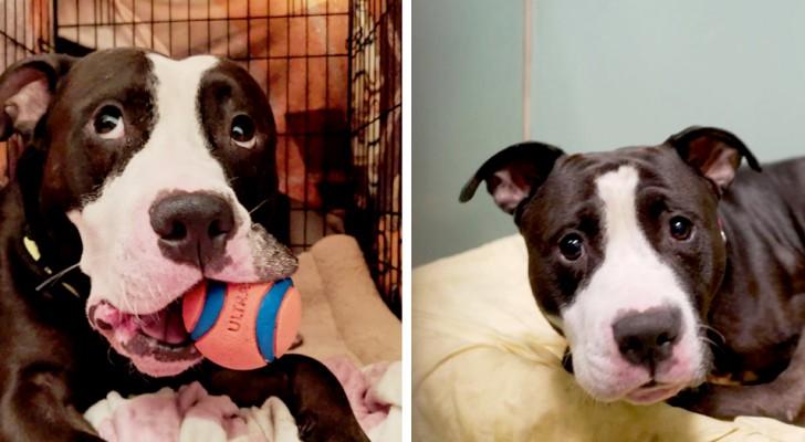 Este pobre perrito ha sido abandonado por su familia humana porque estaba por llegar un bebé