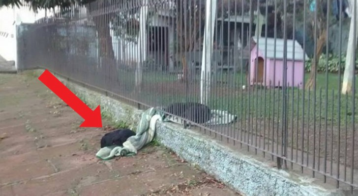 This little dog divides her blanket with a stray dog, demonstrating all the love she is capable of