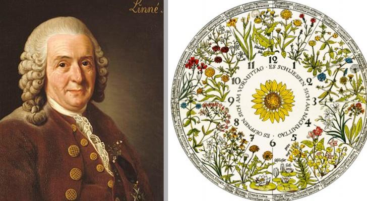 L'orologio floreale che scandiva il tempo seguendo l'apertura dei fiori: l'idea poetica di Carlo Linneo