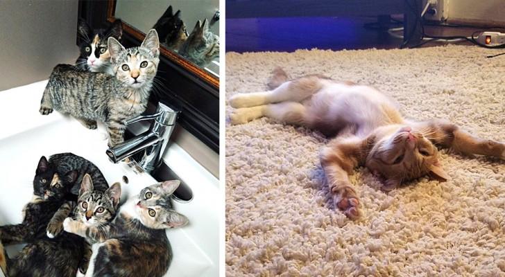 Viver com um gato: 16 fotos que mostram as aventuras domésticas dos nossos felinos