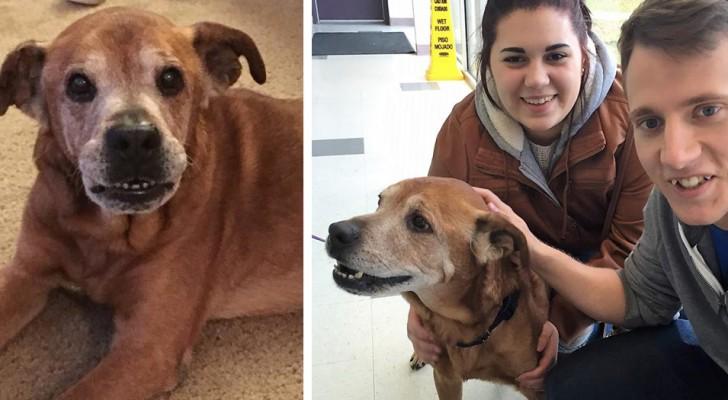 Den här gamla hunden hamnade på ett  djurskyddshem och fick vänta i 3 långa år innan någon adopterade den