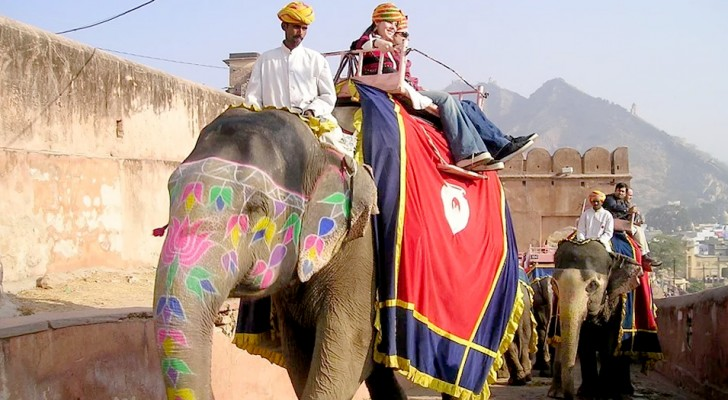 Cambogia: a partire dal 2020 gli elefanti non verranno più impiegati per trasportare i turisti stranieri
