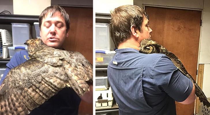 Nachdem sie von einem Auto angefahren wurde, umarmt diese Eule zärtlich den Mann, der sie gerettet hat