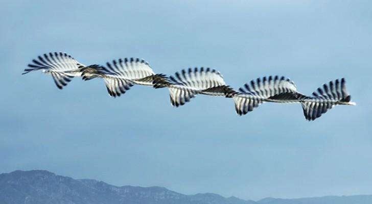 Ce photographe immortalise les volées d'oiseaux comme si elles étaient de fascinantes  sculptures en mouvement