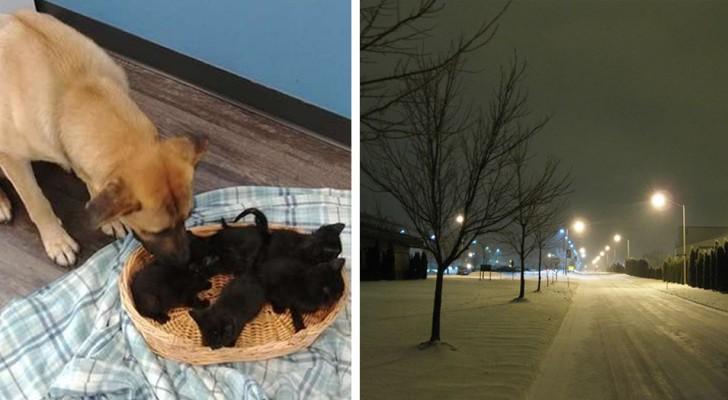 Dieser streunende Hund wurde eingebettet im Schnee gefunden als er neugeborene Katzen beschützte
