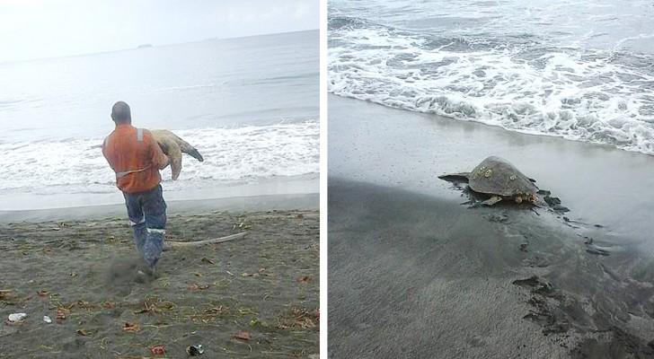Den här mannen köper havssköldpaddor på marknaden för att släppa ut dem i havet