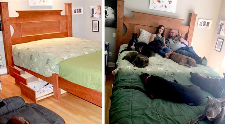 Ce couple a construit un lit spécial pour tous les chiens sauvés des refuges qui vivent à la maison