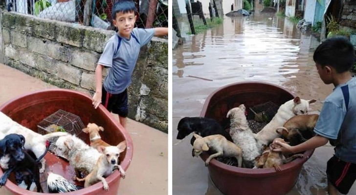 A 10-year-old boy saves animals that were in danger of drowning thanks to a makeshift canoe