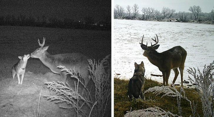 Questo cane è scappato di casa per trascorrere due giorni con il suo improbabile amico cervo