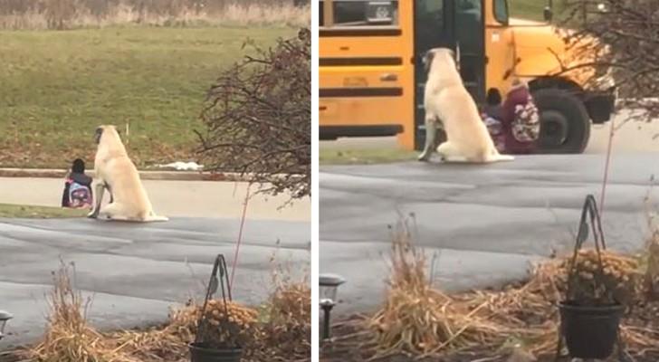 Dieser Hund sitzt neben seinem Frauchen und wartet mit ihr auf die Ankunft des Schulbusses