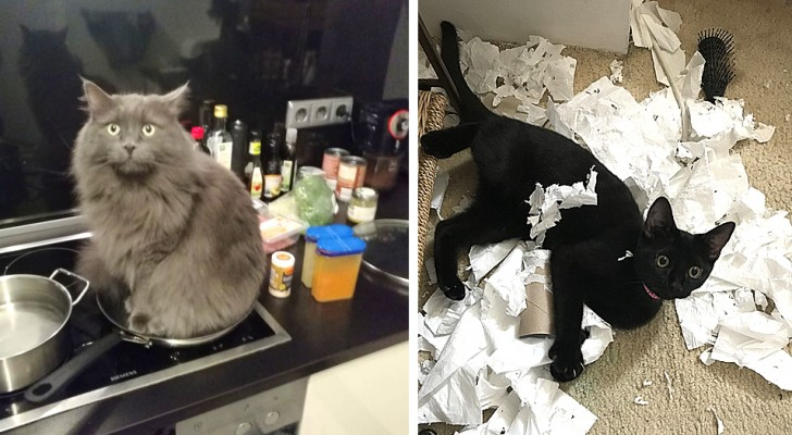 12 photos of naughty cats who display to everyone their mischievous destructive tendencies