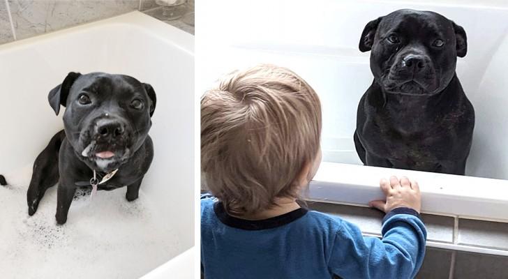 Den här hunden smyger in i grannarnas badkar för att bada med deras barn