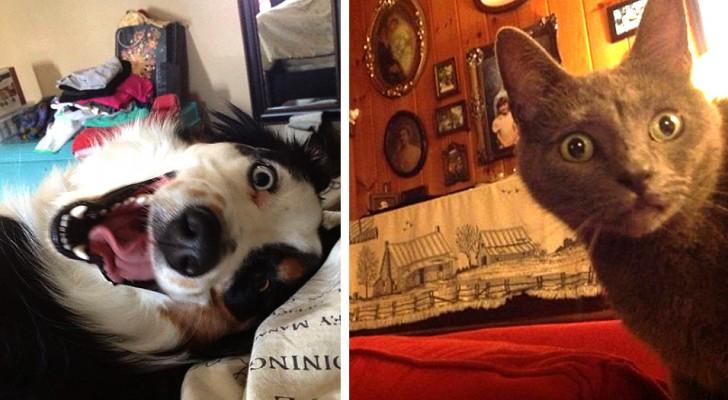 11 animaux qui ont surpris leurs amis humains au réveil avec leurs comportements bizarres