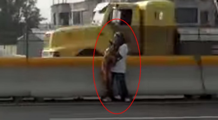 Un cane giace al lato dell'autostrada e la coraggiosa operazione di salvataggio rischia di finire in tragedia