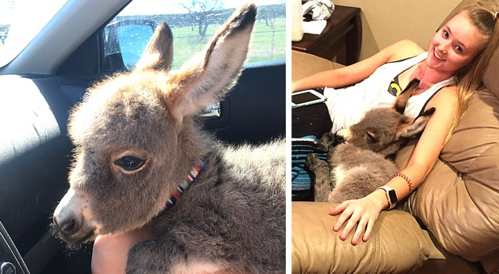 This girl saved a foal (baby donkey) and then she adopted it as a pet