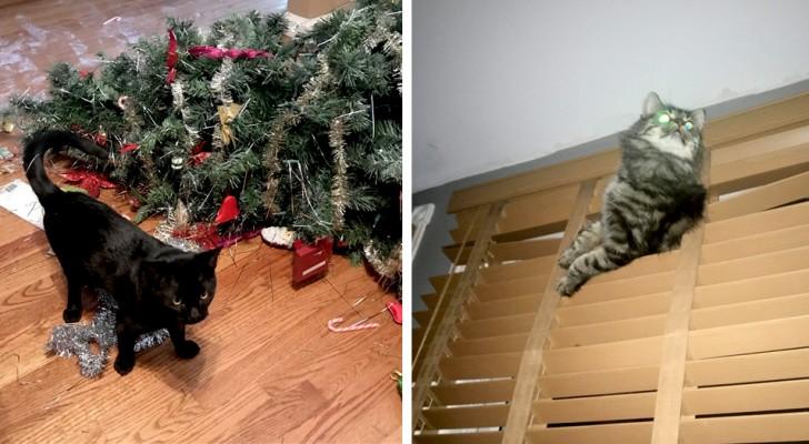 21 lustige Aufnahmen zeigen, dass eine Katze im Haus sehr viel Arbeit machen kann