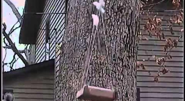 Uno scoiattolo in volo
