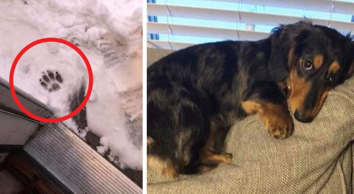 He touched the snow with one little paw and that was enough, now this dog hates the cold and refuses to leave the house